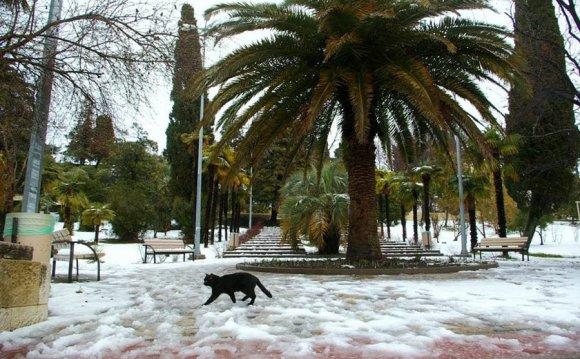Зимний Сочи. Фото с сайта