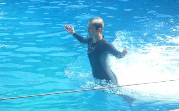 отдых сочи, адлер- дельфинарий